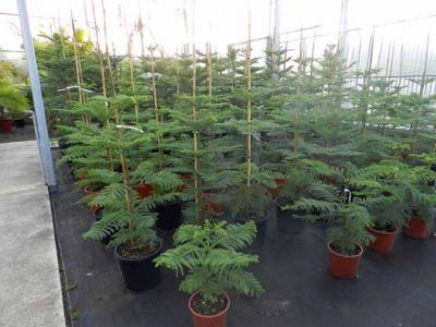 Viveros de plantas 4